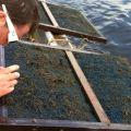 Checking egg mat